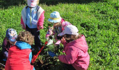 Nenos e nenas da Escola Infantil Municipal da Guarda plantaron árbores xunto ao Castelo de Santa Cruz