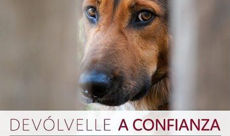 """A campaña """"Devólvelle a confianza"""" de CAAN anima  á adopción de cans maltratados"""