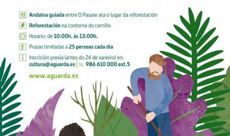 Coñece o Camiño de Santiago prantando unha árbore autóctona